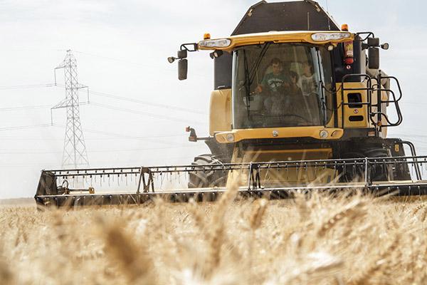 Aumento del 2 por ciento de la cosecha de cereal de invierno a pesar de la reducción de superficie... y la climatología