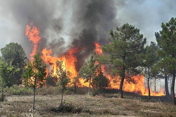 El PSOE presentará en las Cortes regionales una propuesta integral en materia de incendios forestales