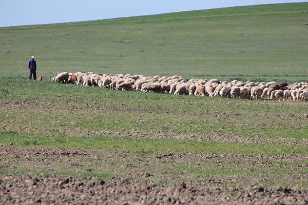 La renta agraria se redujo un 24 por ciento en 2014 en Castilla y León