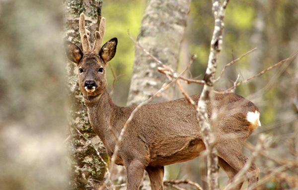 El portal de caza online de las Reservas Regionales se aproxima al 1.500.000 de visitas desde su puesta en funcionamiento