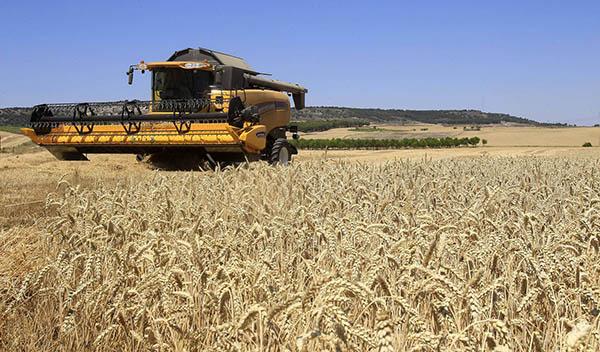 Casi 78.000 agricultores y ganaderos pueden consultar desde hoy el pago básico de la nueva PAC