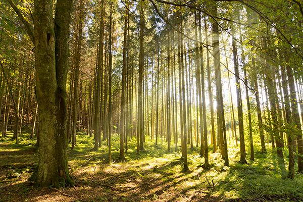 Fomento presenta sus líneas de actuación para el sector forestal