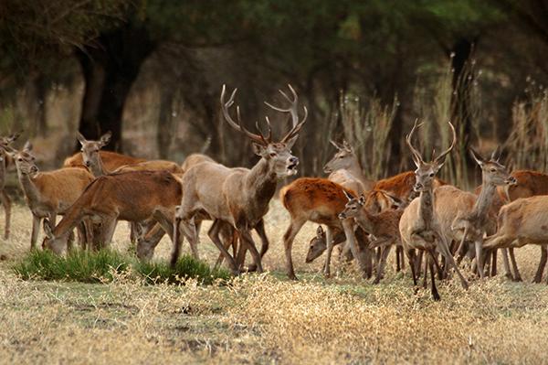 Las reservas de caza recaudan medio millón de euros