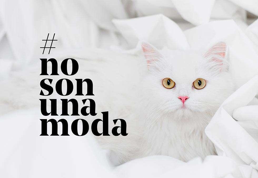No son una moda, campaña para evitar el abandono de perros y gatos