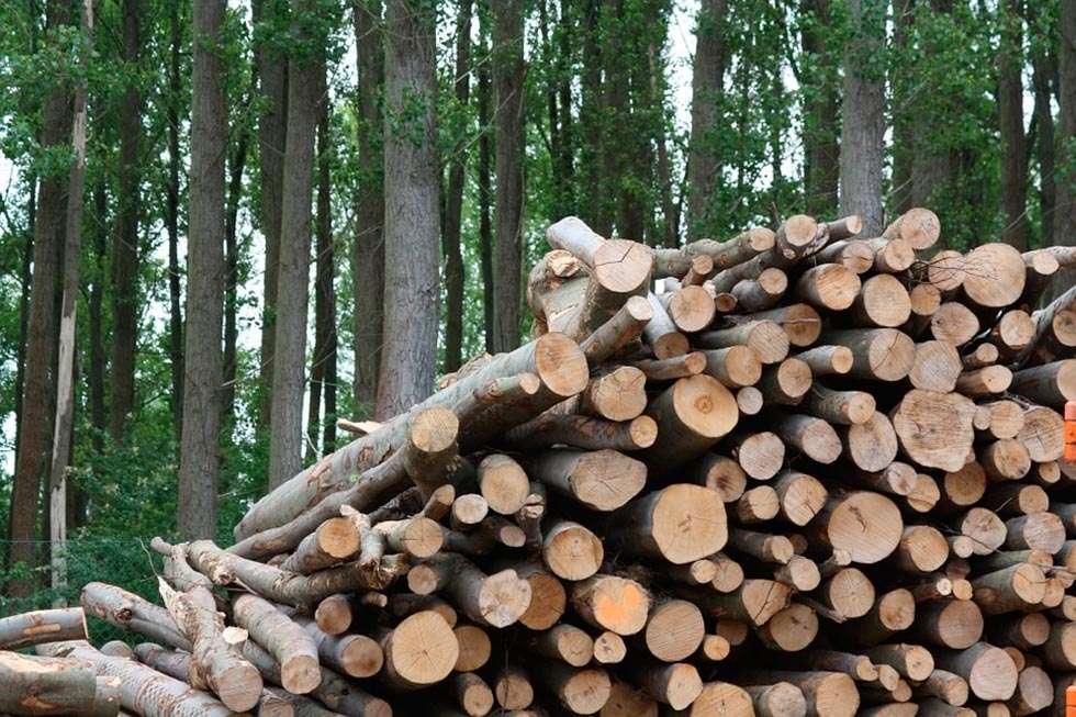 La biomasa agroforestal es más barata que los combustibles fósiles