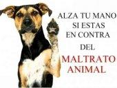 Detenido en Soria por intentar matar a un cachorro de perro