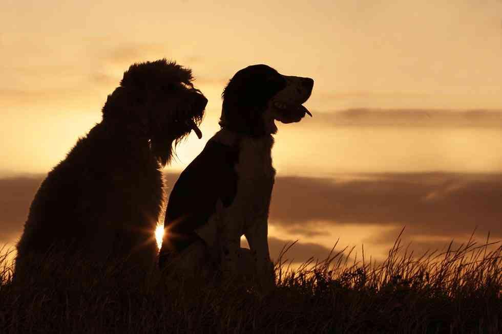 La Fundación Affinity se congratula de la mejora de los derechos de los animales