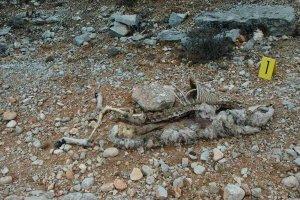 Investigado un ganadero de ovino por maltrato de animales