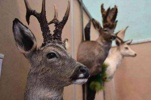 La reserva de caza de Urbión aprueba su plan anual para 2019-2020