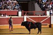 Renovación en la junta directiva de la Peña Taurina Soriana