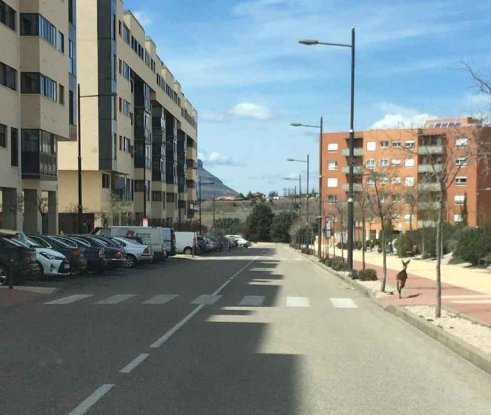Un corzo se pasea por la calle Manuel Fraga