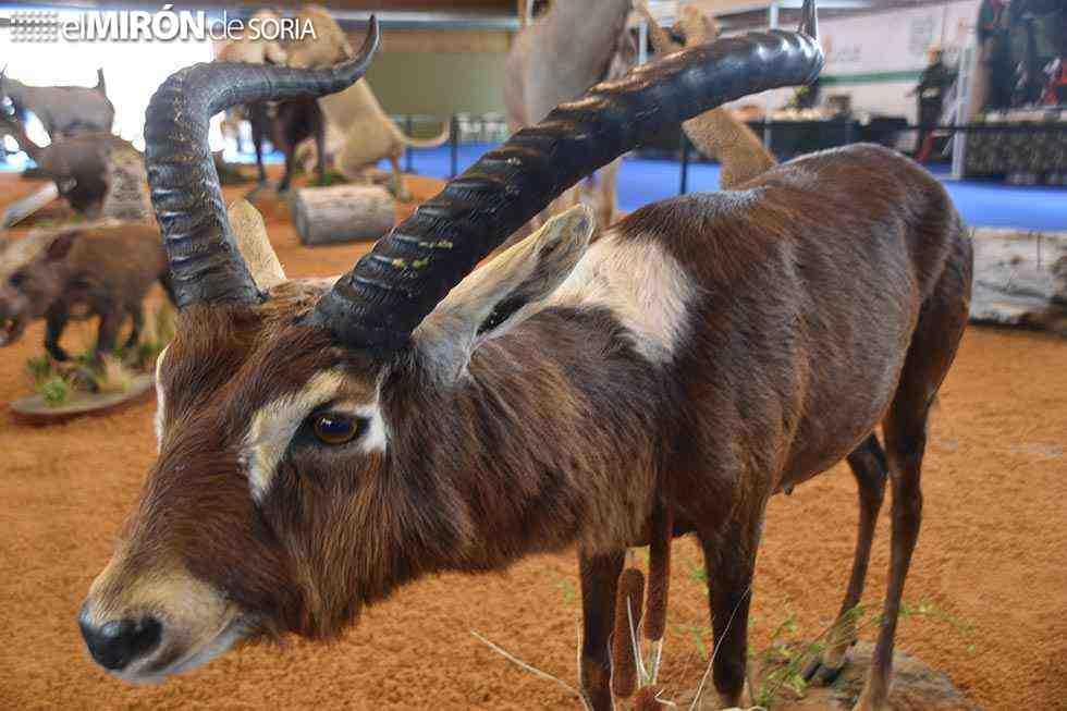 Venalmazán reivindica el recurso de la caza