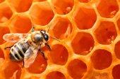 La Junta convoca las ayudas para producir y comercializar miel