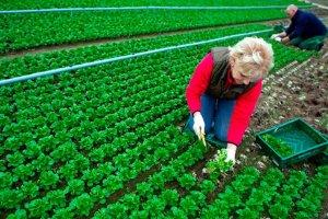 La Junta apuesta por impulsar el cooperativismo agroalimentario