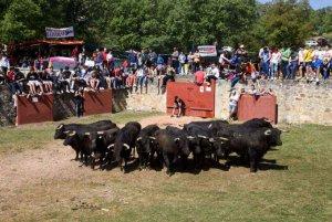 Horarios para el desencajonamiento de los toros