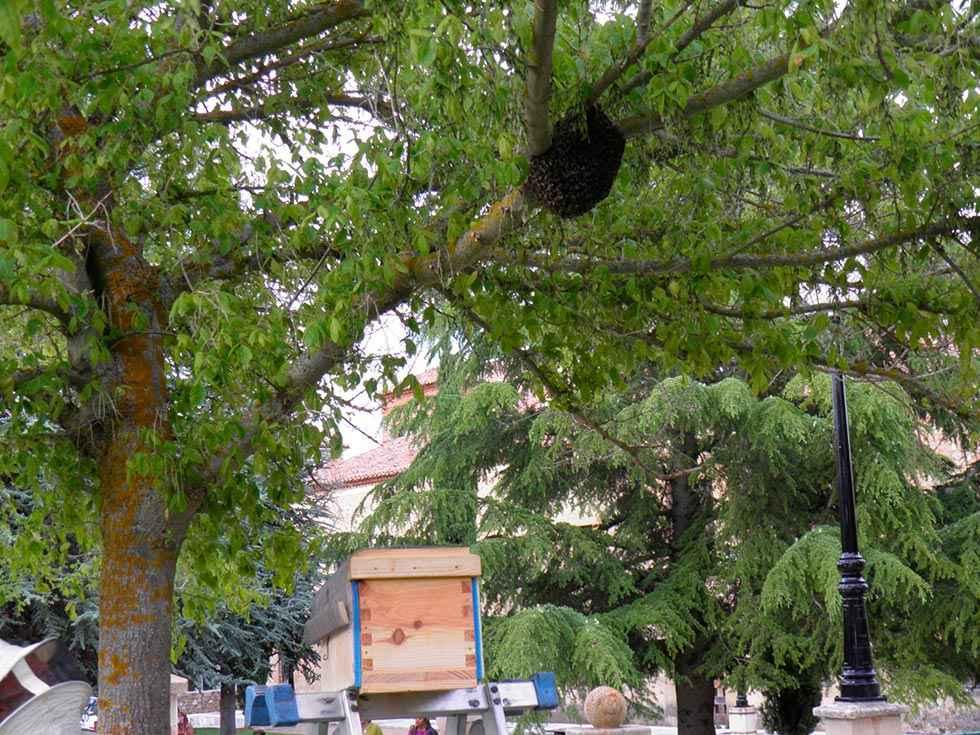 Retirado un enjambre de abejas del parque de Santa Clara