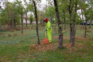 Las brigadas forestales inician sus trabajos de limpieza