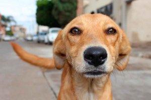 Curso para detectar los casos de maltrato animal