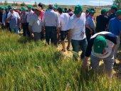 Trescientos agricultores visitan los campos de ensayo de ASAJA