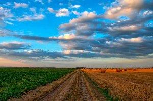 Nuevo convenio colectivo del sector agrícola-ganadero