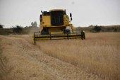 ASAJA califica de irregular la cosecha cerealista