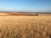 Agroseguro abona casi 53 millones por sequía y pedrisco