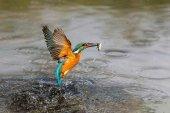 La Junta promociona el turismo ornitológico en Inglaterra