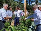 La Diputación garantiza apoyo a proyecto de frambuesas