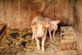 PACMA consigue suspender un concurso con animales en Burgos