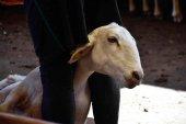 El PSOE urge las ayudas extraordinarias para los ganaderos